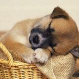 ペットと一緒にバンコク駐在員生活を送ろう!〜日本での手続き編〜