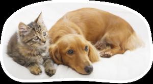 ペットと一緒にバンコクで駐在員生活を送ろう!〜ペットと一緒に暮らすお部屋探しのポイント〜